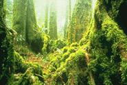 Central Eastern Rainforest Reserves