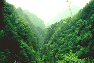 Mount Emei Scenic Area