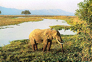 Mana Pools National Park, Sapi and Chewore Safari Areas